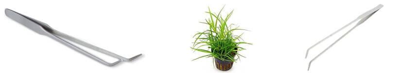 Planting Material